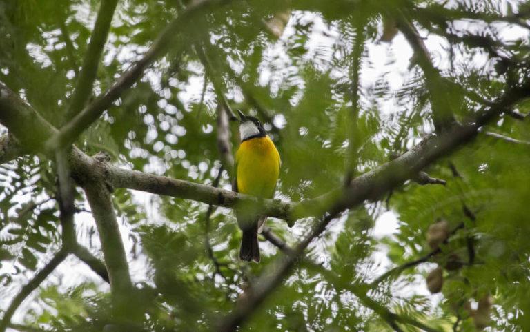 BIRD IN RINCA ISLAND