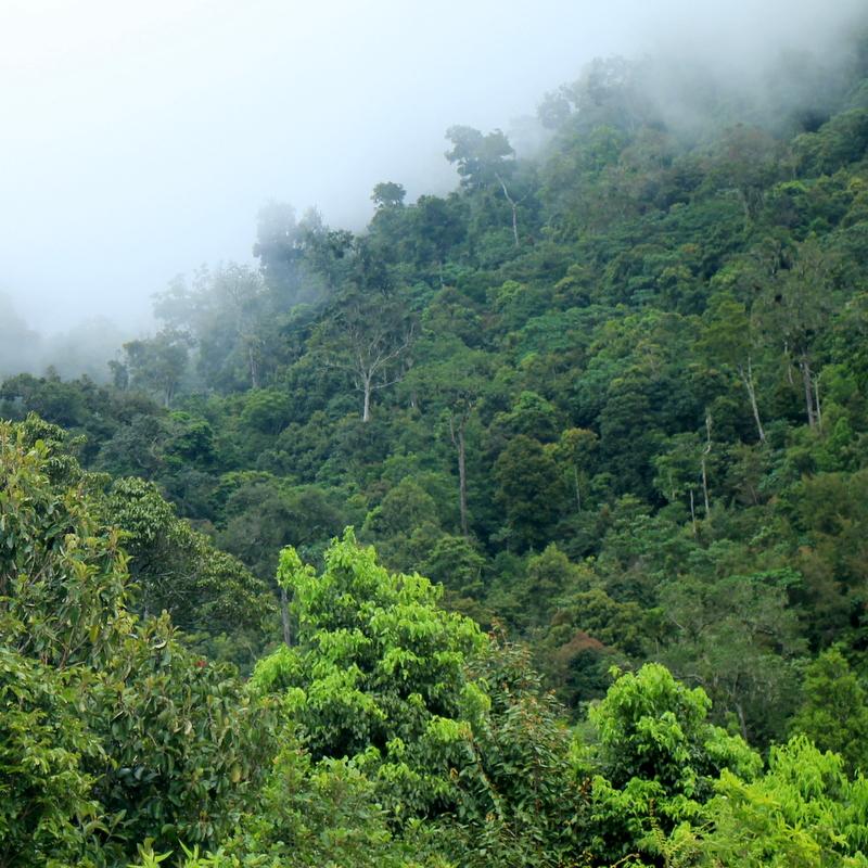 Ruteng Nature Reserve - Flores Wild Life