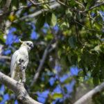 Komodo - West Flores Birding Tour