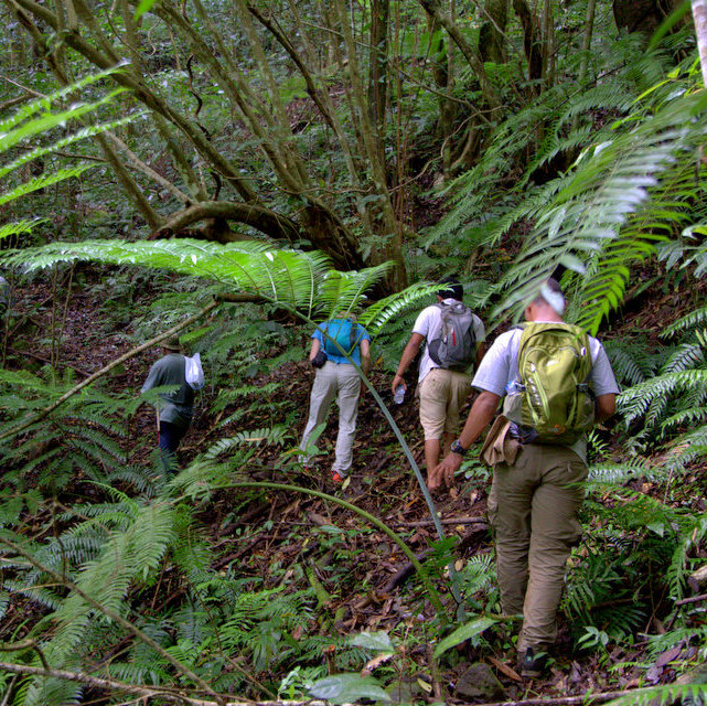 Trekking Flores - Eco Tour