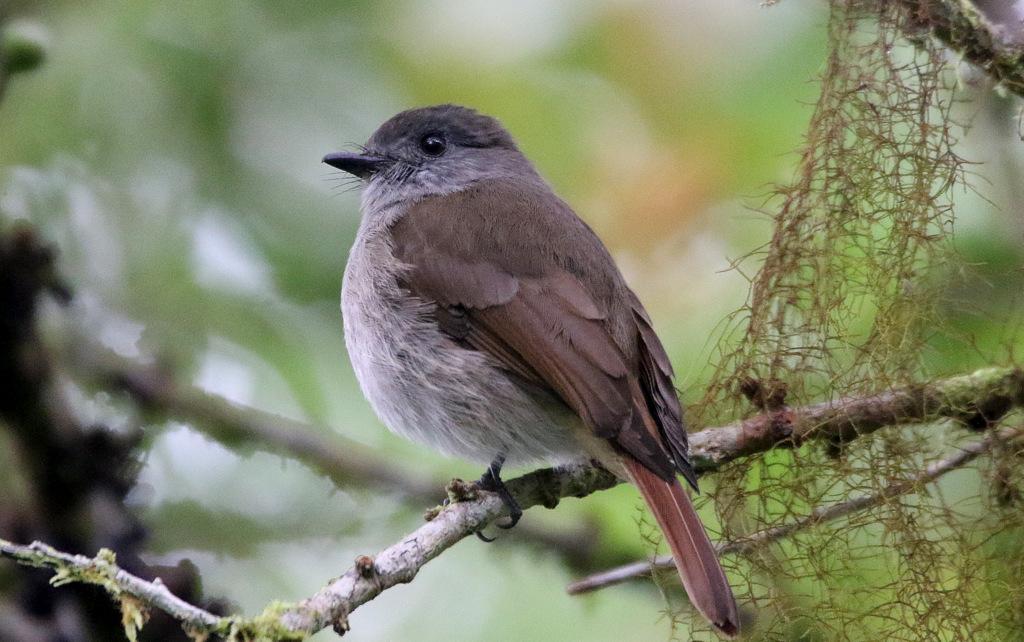 Sumba-Birding-Tours
